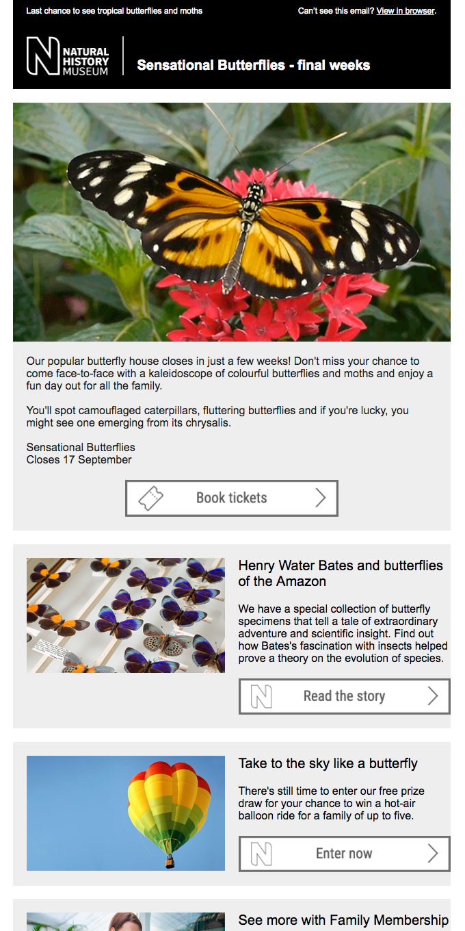 Last chance to see Sensational Butterflies!