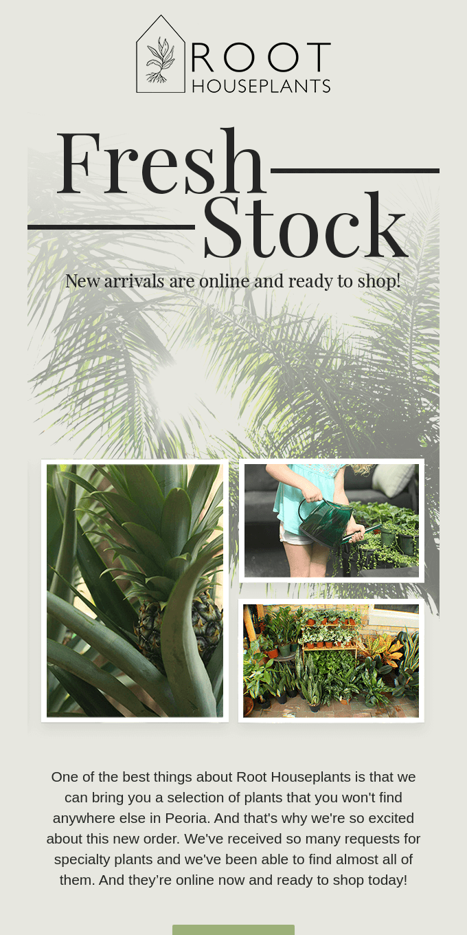 New plants in stock now!