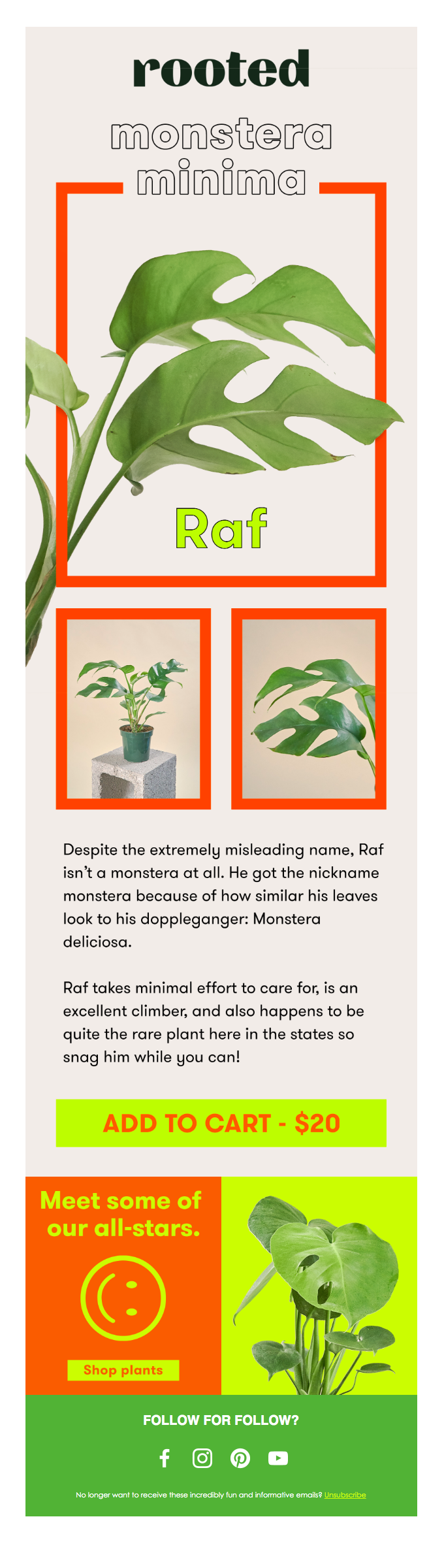 🌱 YOUR MINI MONSTERA IS HERE 🌱